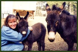 Miniature Donkeys and adults