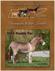 HHAA Bumbles, 2011 High Point Halter Jennet of Tennessee!